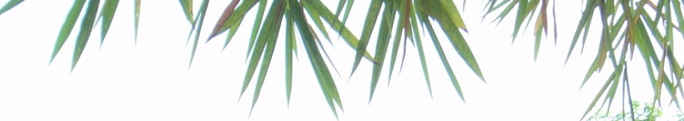 cropped-bamboo-light.jpg