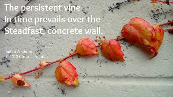 persistent vine_1_fb