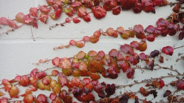 persistent vine_3_fb