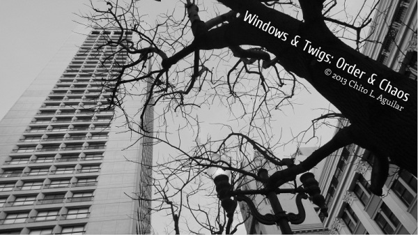 Windows & Twigs: Order & Chaos